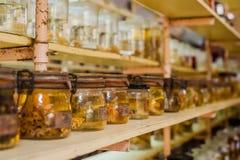 Mariene dieren bewaarde alcohol in glazen buizen Stock Afbeeldingen