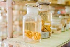 Mariene dieren bewaarde alcohol in glazen buizen Royalty-vrije Stock Afbeelding