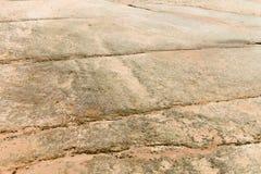 Mariene fossilsof voorhistorische mariene schepselen Stock Afbeeldingen