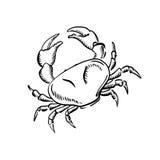 Mariene krab met grote klauwen, schets Royalty-vrije Stock Afbeelding