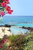 Mariene lagune en rode oleanderbloemen Royalty-vrije Stock Afbeeldingen
