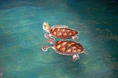 Mariene schildpadden Royalty-vrije Stock Foto's