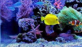 Mariene vissen in Marien aquarium royalty-vrije stock afbeeldingen
