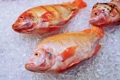 Mariene vissen op ijs Stock Afbeeldingen