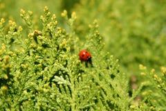 Marienkäfer auf Anlage, Fokus, Natur, rot, grün, schön Frankreich der Burgund stockbilder