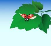 Marienkäfer auf Blatt Stockbild