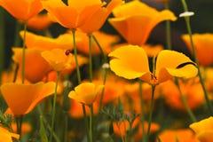 Marienkäfer auf Blume Stockfotos
