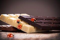 Marienkäfer auf einer Schokolade Stockbild
