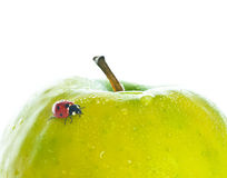 Marienkäfer auf grünem Apfel Lizenzfreies Stockbild