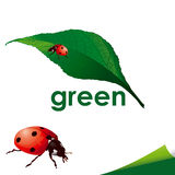 Marienkäfer auf grünem Blatt Lizenzfreies Stockbild