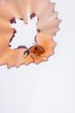 Marienkäfer, der auf Bleistiftschnitzel geht Stockbild