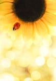 Marienkäfer, der auf einer Sonnenblume sitzt Lizenzfreie Stockfotografie