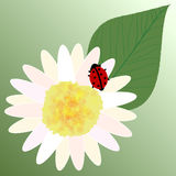Marienkäfer in der Blattsonnenblume Stockfoto