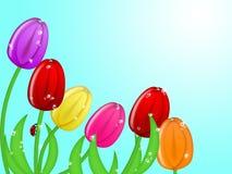 Marienkäfer, der oben bunte Tulpe-Blumen steigt Lizenzfreies Stockfoto