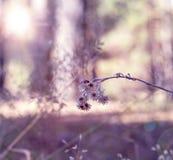 Marienkäfer sitzt auf einer trockenen Niederlassung einer Blume im Wald lizenzfreie stockbilder