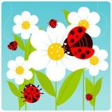 Marienkäfer und Blumen lizenzfreie abbildung