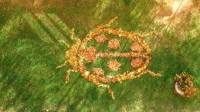 Marienkäfer von Blättern stockbilder