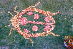 Marienkäfer von Blättern stockfotografie