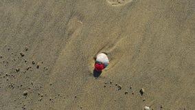 Marienkäfergeschichte: Wochenende, an, das er auf den Strand setzt Stockfotografie