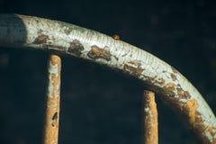 Marienkäfer-Insekt, alter Weinlese-Stuhl Stockbilder
