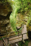 Marienschlucht ravine in summer. Marienschlucht is a deep ravine wedged on the steep shores of lake Constance. A wooden staircase is zigzagging through the chasm Stock Images