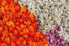 Marigold ανθίζει το υπόβαθρο Στοκ φωτογραφία με δικαίωμα ελεύθερης χρήσης