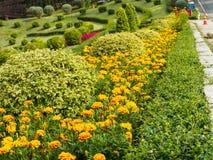 Marigold γραμμή Στοκ Φωτογραφίες