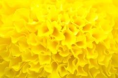 Marigold εγκαταστάσεις στον κήπο στο καλοκαίρι κάτω από το φως του ήλιου, χαρακτηριστικά με το yellowl, υπόβαθρο φύσης, αφηρημένα Στοκ φωτογραφία με δικαίωμα ελεύθερης χρήσης