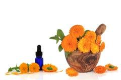 marigold λουλουδιών ουσίας Στοκ Φωτογραφίες