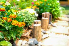 Marigold λουλούδια στις πλοκές Στοκ Φωτογραφία
