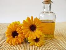 Marigold πετρέλαιο Στοκ Εικόνες