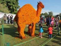Marigold τέχνη λουλουδιών στο ροδαλό φεστιβάλ, Chandigarh Στοκ Εικόνες