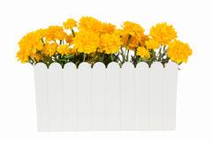 Marigold Artificial flowers in white plastic vase isolated Stock Photo