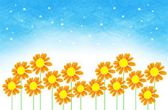 Marigold background. Marigold standing in row and starry sky behind Royalty Free Stock Photos