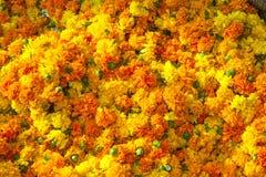Marigold background Royalty Free Stock Photo