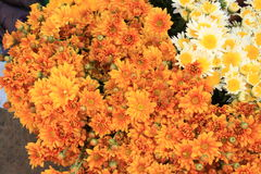 Marigold bouquet Royalty Free Stock Image