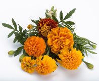 Marigold bouquet Royalty Free Stock Photos