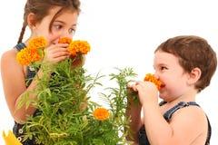 Marigold da menina do menino Imagem de Stock