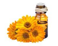 Marigold essential oil Stock Image