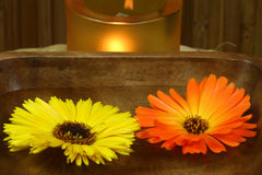 Marigold floating. Two marigolds - yellow and orange, floating on woter in wooden bowl. Therapeutic calming spa treatment Stock Image