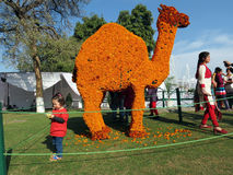 Marigold flower art at Rose Festival, Chandigarh. Visitors admiring flower art and posing for picture at Zakir Hussain Rose Garden during Rose Festival in Sector Royalty Free Stock Photo