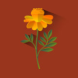 Marigold Flower Blossom Brown Background Royalty Free Stock Images
