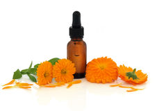 Marigold Flower Essence Royalty Free Stock Images