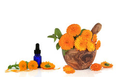 Marigold Flower Essence Stock Photos