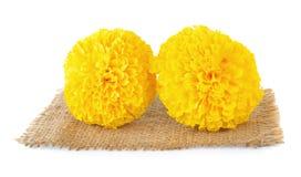 Marigold flower Stock Images