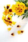 Marigold flowers Royalty Free Stock Photos