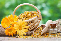 Marigold flowers, basket with dried plants and bottles of essent Royalty Free Stock Photos