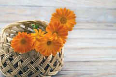 Marigold flowers in a basket Royalty Free Stock Image