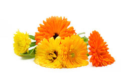 Marigold flowers bouquet Stock Image
