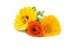 Marigold flowers bouquet Stock Photo